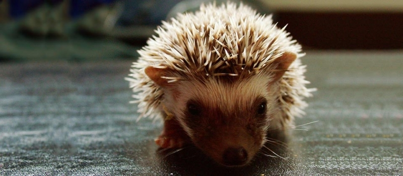 Hedgehogs and the Importance of Experience